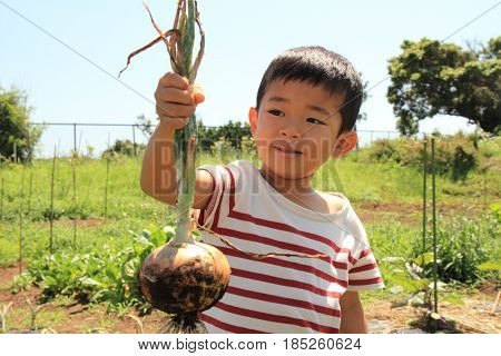 Japanese Boy Digging Onion (4 Years Old)