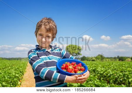 Boy with a strawberry crop in his hands on a strawberry field
