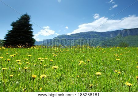 a beautiful view of the alps tree on grass field