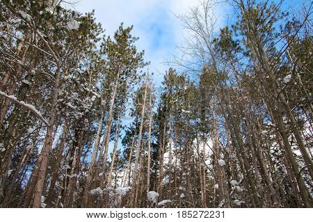 Exterior daylight stock photo of trees blanketed in snow with semi-cloudy blue sky in the background