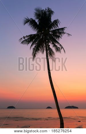 Palm tree silhouette at the sunset, India