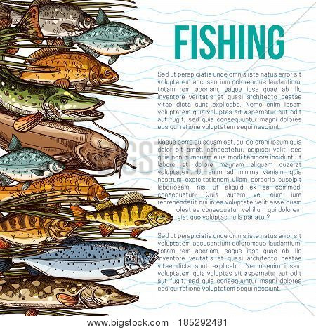 Fishing vector poster with information of sea and ocean fish food products. Seafood design of fishes catch salmon, herring or trout and bream, tuna or marlin and crucian carp or pike and sheatfish