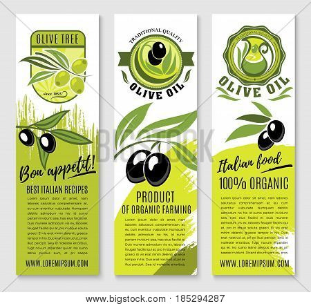 Olive oil product and Italian olives banners for extra virgin cooking or salad oil product. Vector design set of black and green olive branches for natural organic bottle label