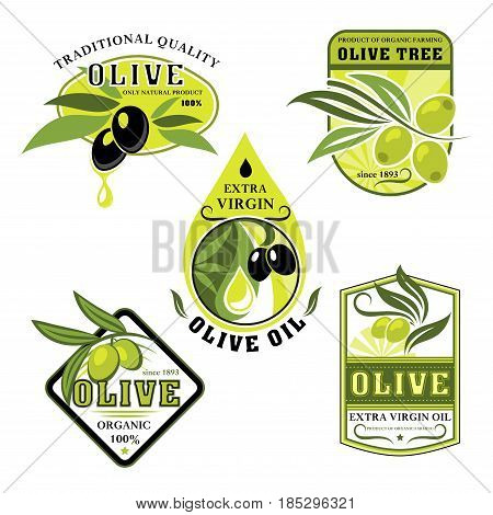 Olive oil product vector icons. Isolated set of Italian olives symbols for extra virgin cooking or salad oil design. Black and green olive branches for natural organic bottle label