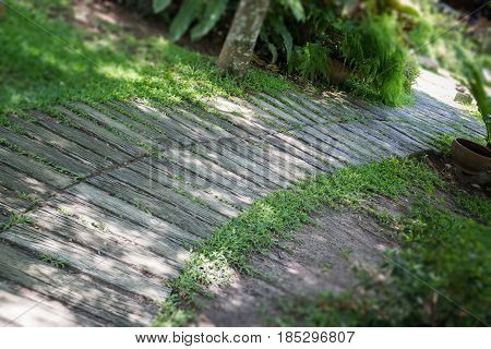Green Garden Pathway In Summer stock photo