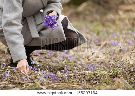 Woman picking forest first snowdrops in the forest or park. Spring time background