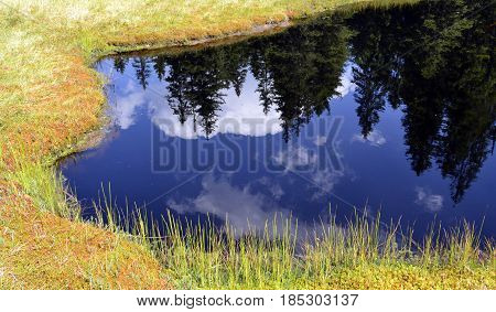 Firs reflection in the calm blue water of a mountain lake