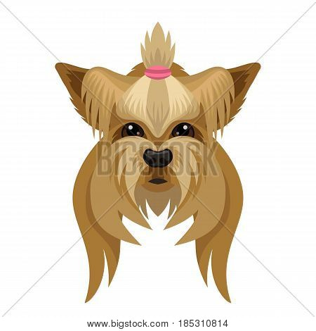 Vector cute Yorkshire Terrier breed face symbol of next 2018 new year of dog pet zoo icon