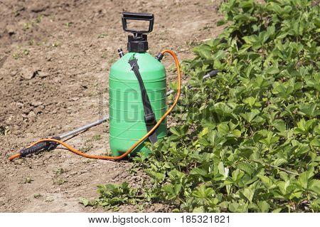 Spraying Fertilizer. Hand-pumped sprayer. Using pesticides on the garden. Spraying of strawberry bushes during flowering to the formation of berries of the ovary.