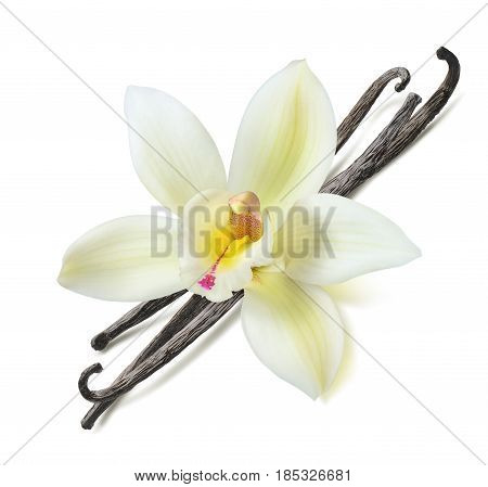 Vanilla bean flower diagonal isolated on white background as package design element