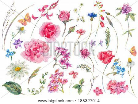 Watercolor set of vintage floral summer natural elements. Garden flowers, wildflowers, butterflies, roses. Daisies, clover, meadow herbal. botanical nature collection isolated on white background.