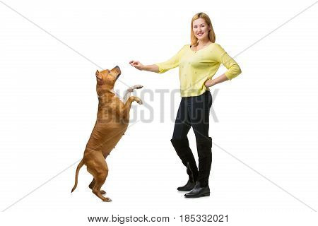 Beautiful happy young woman training american staffordshire terrier dog. Studio shot isolated on white background. Copy space.