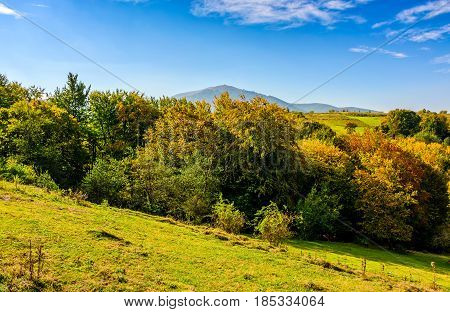 Summer Meadow On Hillside Of Mountain Range