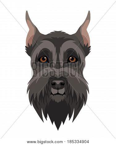 Vector black giant schnauzer face pet zoo icon