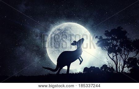 Natural Safari landscape and kangaroo