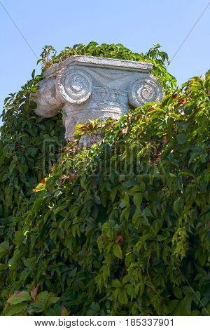 vintage pilaster covered with bushes and green leaves.