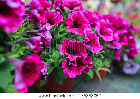 Colorful Spring Flower