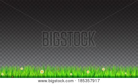 Green, natural grass border with white daisies, camomile flower and small red ladybug on transparent background. Template for your design or creativity.