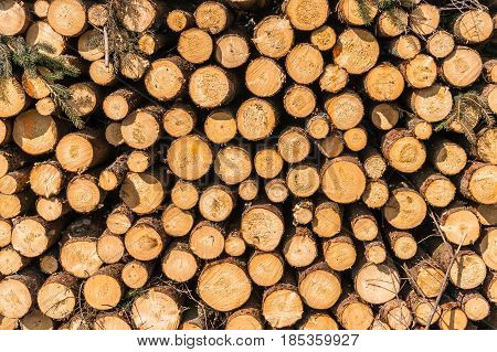 Wooden Logs Or Trunks Of Trees Cut And Stacked On The Ground