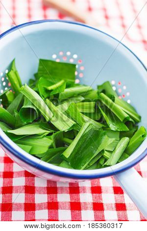 Sliced ramson or wild garlic leaves in colander.