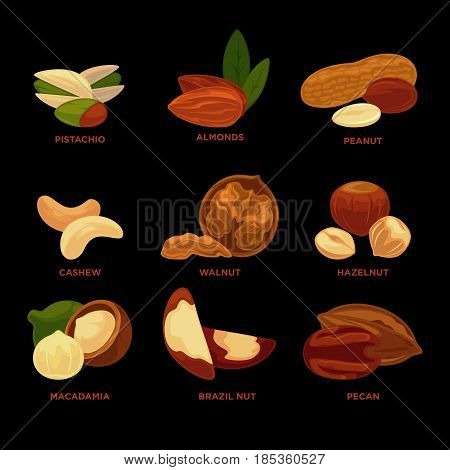 Nuts collection with names isolated on black background. Vector colorful illustration in flat design of nut tree assortment with and without leaves, whole and parts. Healthy eating template poster