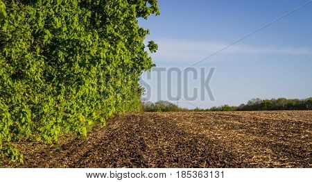 Green leaves of trees growing near a spacious field