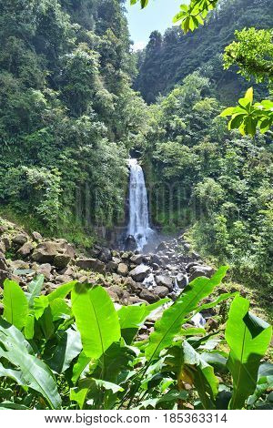 Tropical jungle and waterfall in Dominica, Caribbean