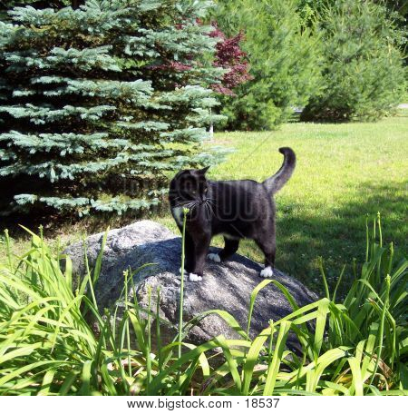 poster of black cat on large rock in garden