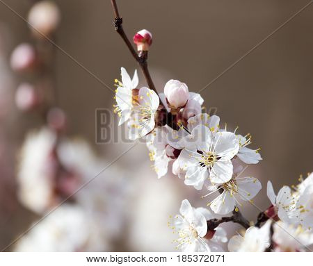 beautiful flowers on a tree in spring .