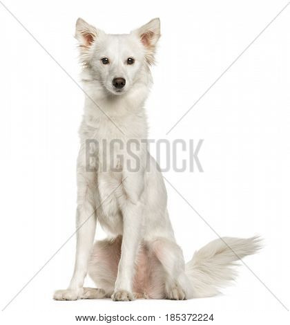 White mixed breed dog sitting, isolated on white