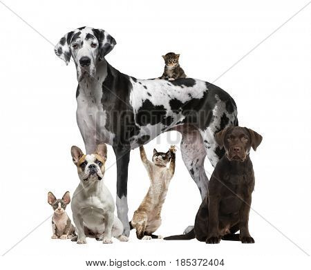 Assembly of cats and dogs, isolated on white