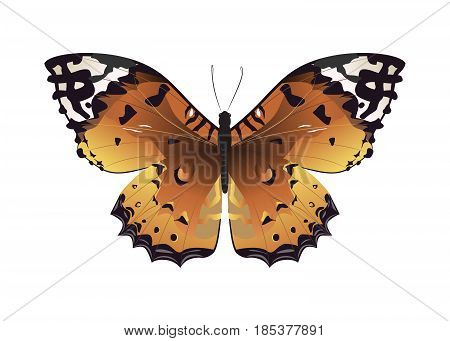 Isolated beautiful butterfly on white background. Brown colors.