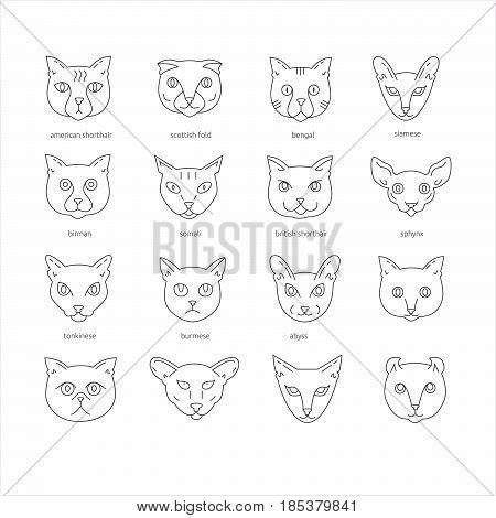 Cat Breeds Outline Icon Set