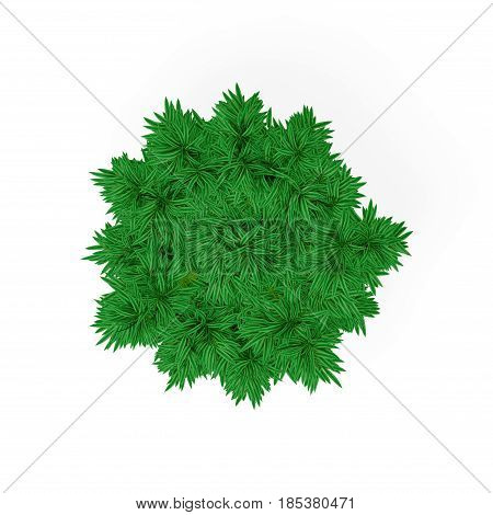 Bamboo tree. Isolated on white background. 3D rendering illustration. Top view.