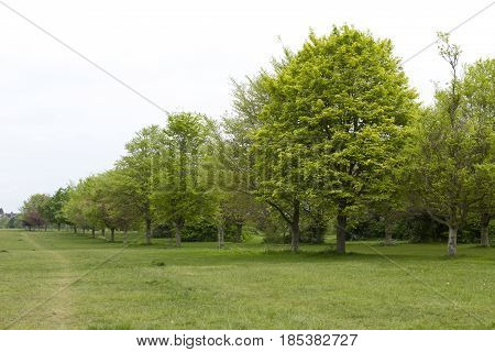 An avenue of trees on Durdham downs in Clifton Bristol