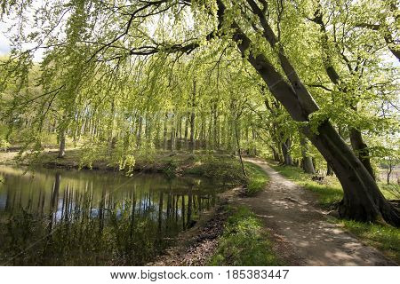 Beautiful pathway trough horizontal springtime beech forest and close to a lake.