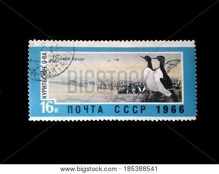 Stamp of the USSR about the image of penguins, the name a bird's market, a bird of the North Pole, the press on the image, old printing products