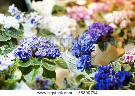 Beautiful flowers in shop on blurred background