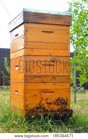 Langstroth beehive with three cases and bees in the garden