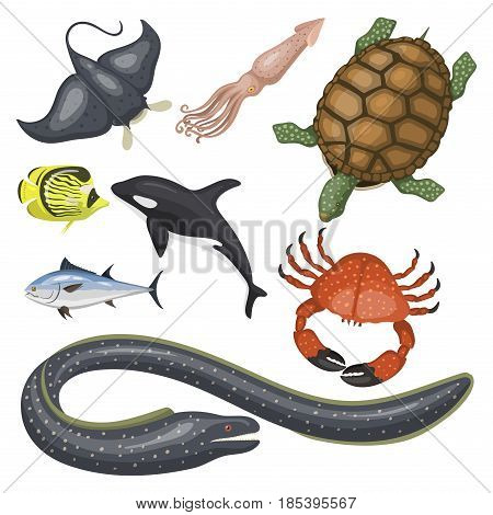 Set of different types of sea animals illustration tropical character wildlife marine aquatic drawing colorful fish. Aquarium ocean cartoon underwater nature cute exotic art fauna.