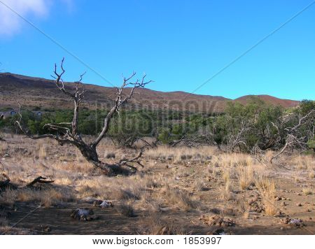 Alpine Desert In Hawaii
