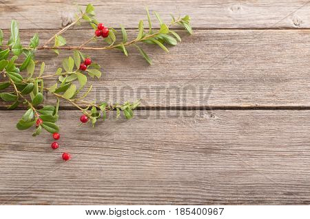 the branch cowberry on old wooden background