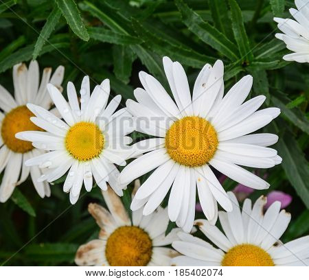 Flowers Blooming In Spring Time