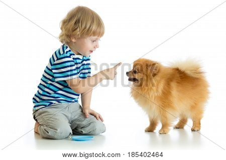 Kid boy training Spitz dog. Isolated on white background.