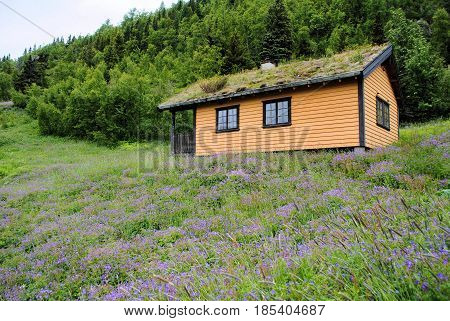 Old orange tourist cabin midst pink flowers