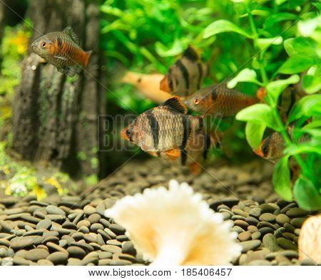A fish in an aquarium . A photo