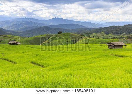 Fresh green rice terrace field and cloudy sky in rainy season at Baan Pa Bong Pieng northern of Chiang Mai Thailand.