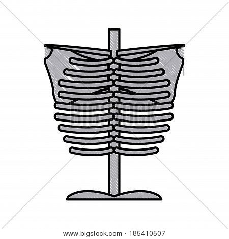 skeleton chest human part anatomy vector illustration