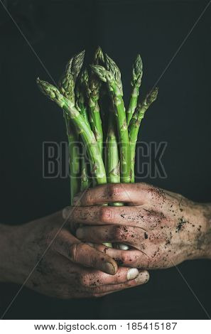 Bunch of fresh uncooked seasonal green asparagus in dirty man's hands over dark background, selective focus, vertical composition. Gardening and local farmer's market concept