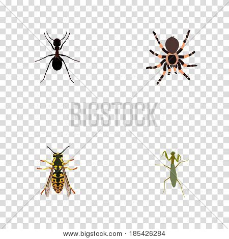 Realistic Grasshopper, Tarantula, Bee And Other Vector Elements. Set Of Bug Realistic Symbols Also Includes Tarantula, Spider, Sting Objects.